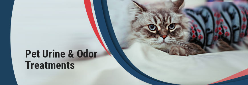 Pet Urine & Odor Treatments in Southern California