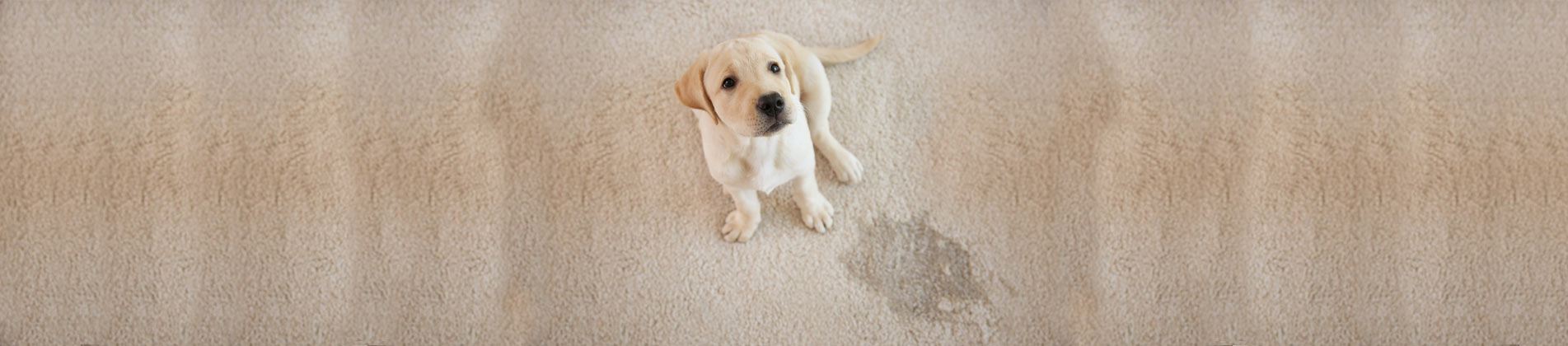 Pet Urine Odor Treatments